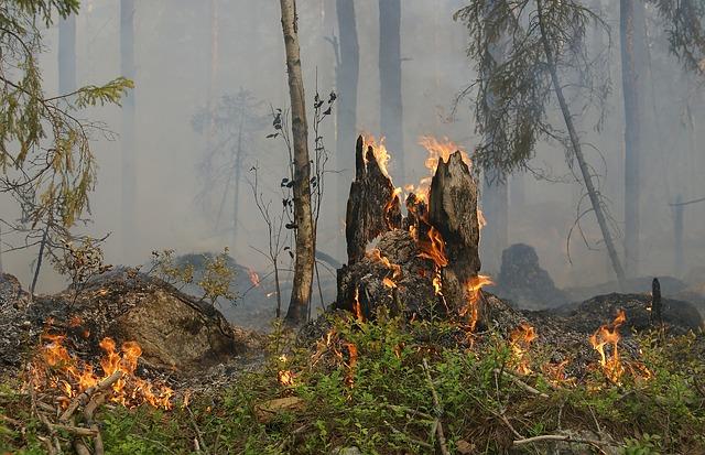 Bollettino di previsione di pericolo incendio per martedi' 14.08.2018